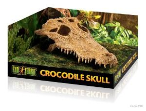 Crocodile Skull Hide