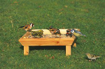 Ground Feeding Table