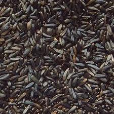 Niger Seed 10kg