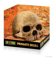 Primate Skull Hide