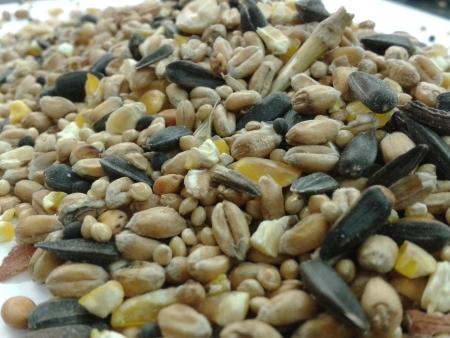 Wild Bird Seed Bulk 20kg